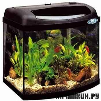 Анимированные обои аквариум на рабочий стол